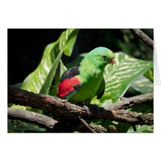 Red-winged Papegaai op het Lidmaat van de Boom Kaart