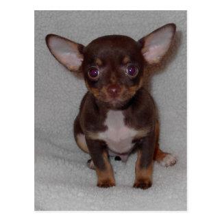 Regel 1 van Chihuahua Briefkaart