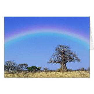 Regenboog en Afrikaanse baobabboom, Adansonia Wenskaart