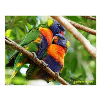 Regenboog Lorikeets Briefkaart