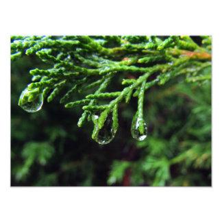 Regendruppels op een boomtak (#2) foto afdruk