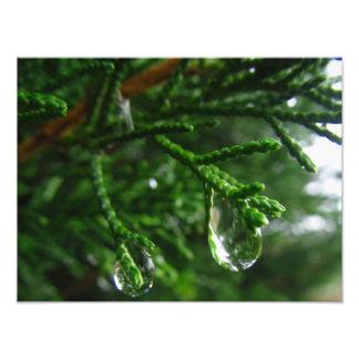 Regendruppels op een boomtak foto