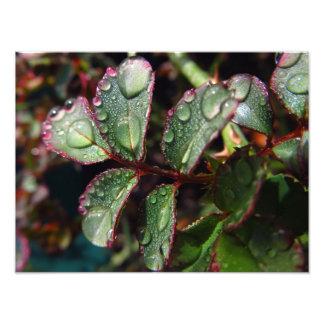 Regendruppels op roze boombladeren foto afdruk