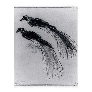 Rembrandt: Twee Studies van een Paradijsvogel Briefkaart