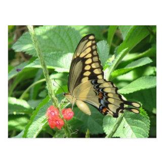Reuze Briefkaart Swallowtail