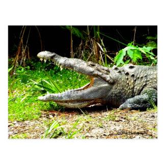 Reuze gator met zijn open mond briefkaart