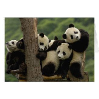 Reuze melanoleuca) babys van Ailuropoda van panda  Wenskaart