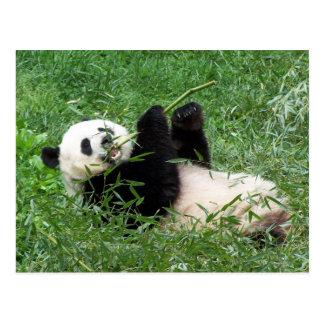 Reuze Panda Lounging die Bamboe eten Briefkaart