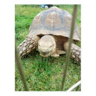 Reuze Schildpad, 1 Briefkaart