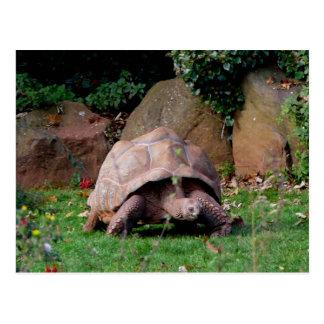 Reuze Schildpad Briefkaart