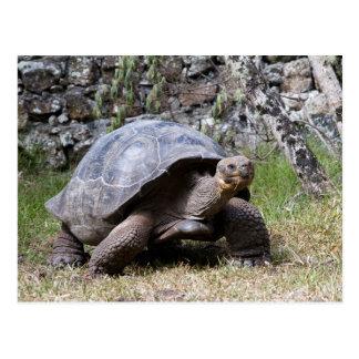 Reuze Schildpad | de Galapagos Briefkaart
