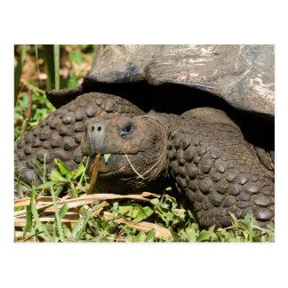 Reuze Schildpad die | de Galapagos eet Briefkaart