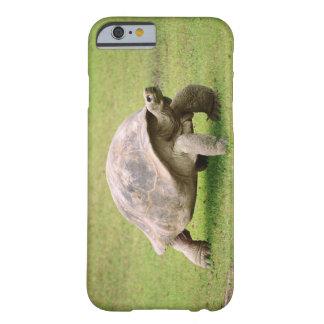 Reuze Schildpad die op gras lopen Barely There iPhone 6 Hoesje