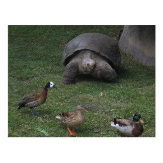 Reuze Schildpad en Eenden Briefkaart