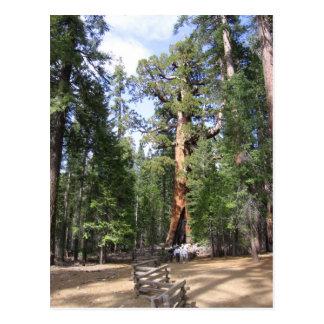 Reuze Sequoia, Nationaal Park Yosemite Briefkaart