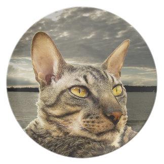Rex het kattenbord van Cornwall Party Borden