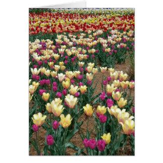 Rijen van Multi-Colored Tulpen Briefkaarten 0