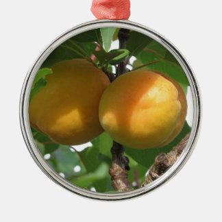 Rijpe abrikozen die op de boom hangen. Toscanië, Zilverkleurig Rond Ornament