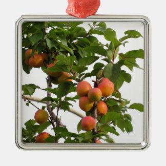 Rijpe abrikozen die op de boom hangen. Toscanië, Zilverkleurig Vierkant Ornament