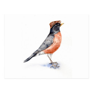 Robin Bird in Pet Briefkaart