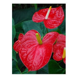 Rode anthurium - tropische bloem briefkaart