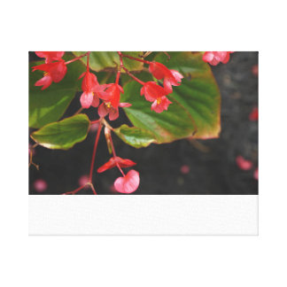 Rode Begonia Stretched Canvas Prints