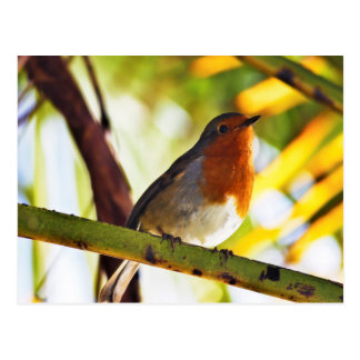 Rode de borstvogel van Robin Briefkaart