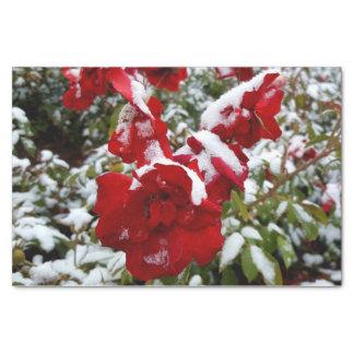 Rode die rozen door sneeuw en rijp worden tissuepapier