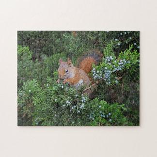 Rode eekhoorn legpuzzel