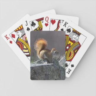 Rode Eekhoorn Pokerkaarten
