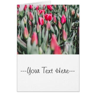 Rode en Roze Tulpen, het Gebied van de Bloem in de Kaart