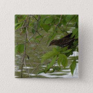 rode gevleugelde zwarte vogel die van een boomtak vierkante button 5,1 cm