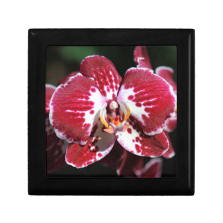 Rode Orchidee Decoratiedoosje