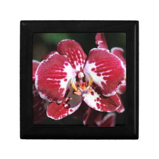 Rode Orchidee Vierkant Opbergdoosje Small