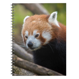 Rode Panda Ringband Notitieboek