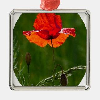 Rode papaver in de zomer 02 zilverkleurig vierkant ornament