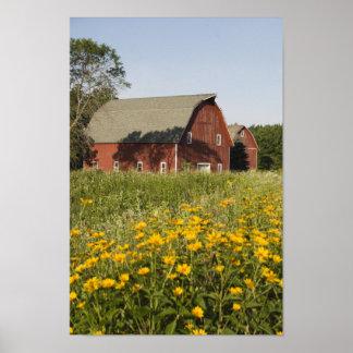 Rode Schuur en Gele Wildflowers Poster