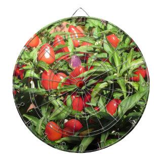Rode Spaanse peperpeper die op het plant hangen Dartbord