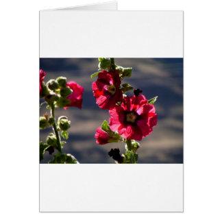 Rode Stokrozen in een de zomertuin Briefkaarten 0