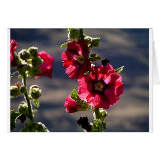 Rode Stokrozen in een de zomertuin Kaart