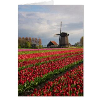 Rode tulpen en een windmolen briefkaarten 0