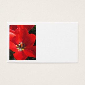 Rode Tulpen Visitekaartjes