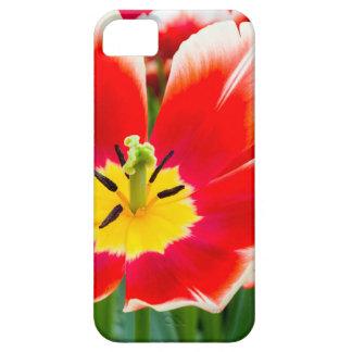Rode witte tulp op gebied van tulpen barely there iPhone 5 hoesje