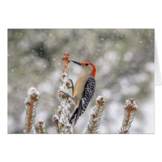 Rood-doen zwellen Specht in de sneeuw Briefkaarten 0