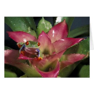 Rood-eyed callidryas van Agalychnis van de Briefkaarten 0
