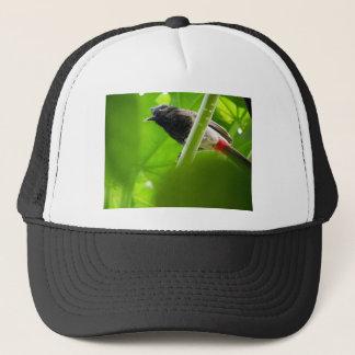 Rood-geluchte Bulbul (Pycnonotus cafer) Trucker Pet