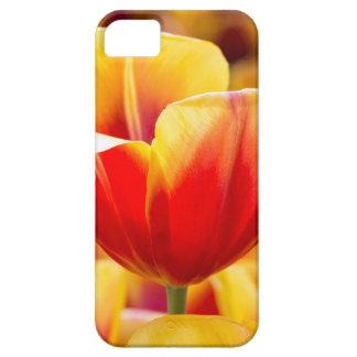 Rood met gele tulp op bloemengebied barely there iPhone 5 hoesje