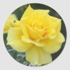Rosa Friesia Ronde Sticker