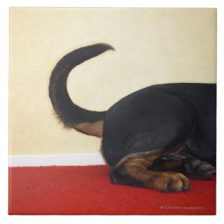 Rottweiler die staart, achterste sectie zwiepen keramisch tegeltje