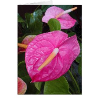 Roze Anthuriums Briefkaarten 0